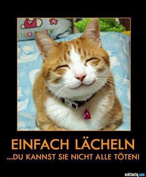 Katzen Meme - die besten 17 ideen zu katzen memes auf pinterest katzen