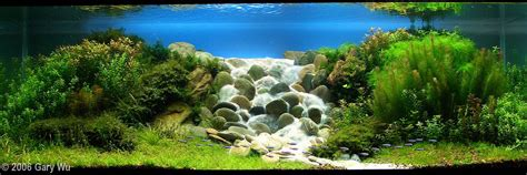 Aquascape Waterfall by 2006 Aga Aquascaping Contest Entry 2