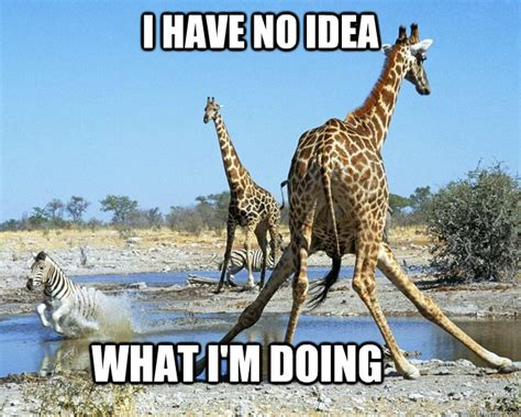 Giraffe Meme - i have no idea what im doing giraffe meme picsmine