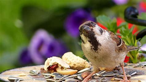 funny bird videos sparrow birds bird vs bird fight