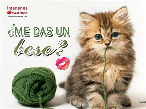 imagenes lindas de amor de gatitos 8 im 225 genes de gatitos tiernos con lindas frases de amor