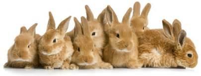 het konijn dierenkliniek castricum