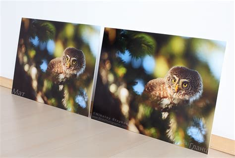 matted photos fine art prints birds photographer nikolay staykov