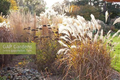 karl förster garten gap gardens autumnal border with miscanthus sinensis