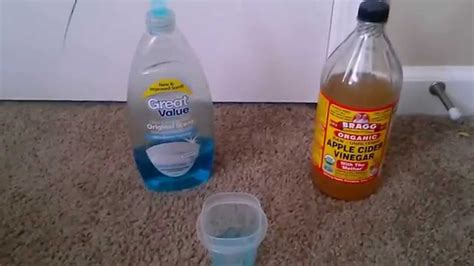 how to get rid of gnats in my house how to get rid of gnats youtube