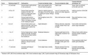 labrador hip score and hip scoring for hip dysplasia