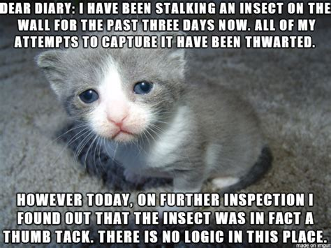 Unhappy Cat Meme - sad meme cat diary image memes at relatably com