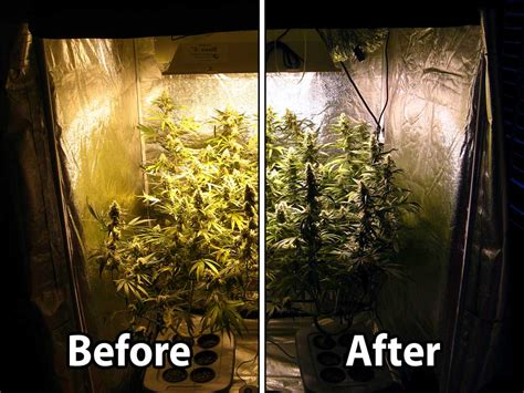 can you grow weed with a black light how to take great pictures under hps grow lights grow