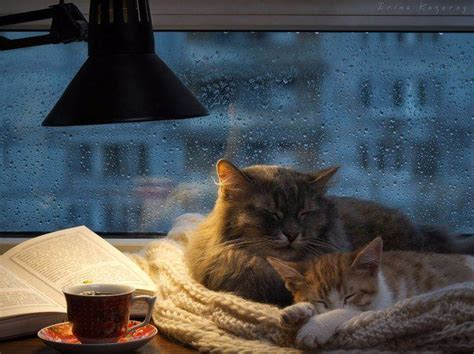 importance of being urnest a coffee house cozy a maggy thorson mystery books 17 best ideas about cozy rainy day on rainy