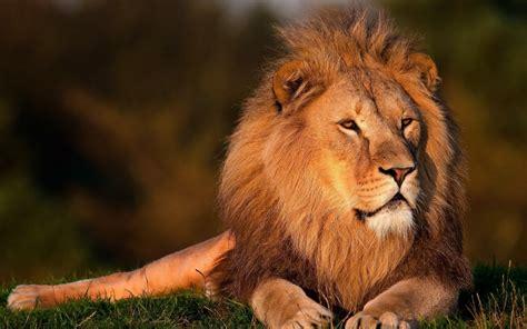 imagenes de animales salvajes en 4k fonds d 233 cran f 233 lins gratuits