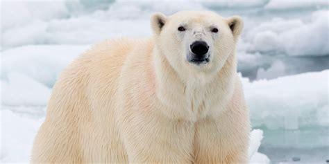imagenes animales grandes los animales m 225 s grandes del mundo