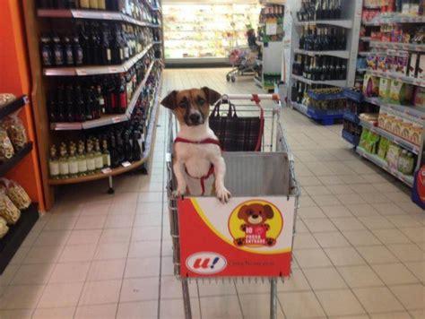 supermercato della porta basta cani alla catena a luino nel carrello della spesa c