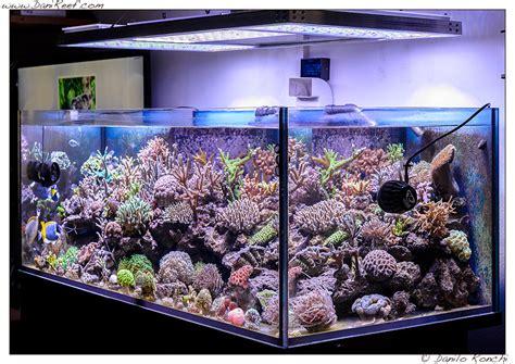 vasche per acquari marini le domande impossibili dagli amici davanti all acquario