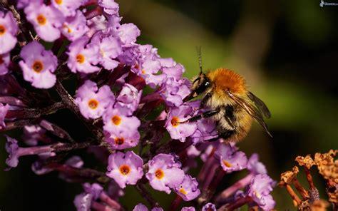 sui fiori ape sui fiori
