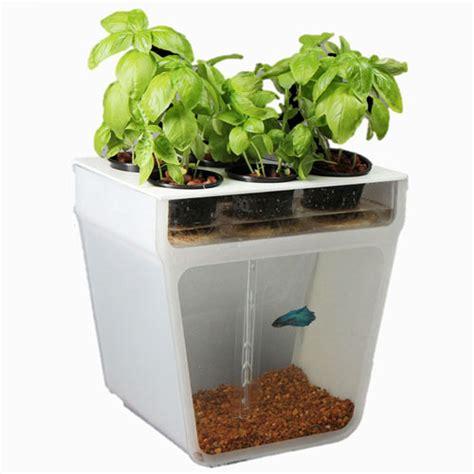 Fish Tank Garden Really Excellent Backyard Aquaponic Reviews Fish Tank Vegetable Garden