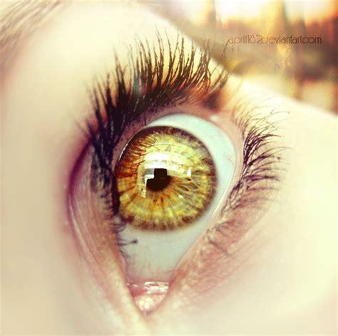 gold eye color best 25 golden ideas on gold