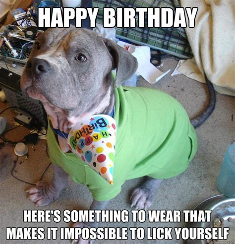 Puppy Birthday Meme - sad birthday dog meme selection japemonster