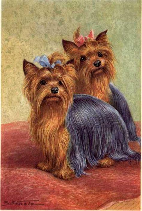 my new yorkie puppy terrier matted print german new u ebay