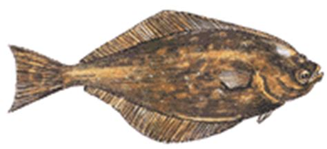 best latin boat names greenland turbot