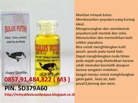 Ciri Ciri Minyak Bulus Asli harga minyak bulus papua asli minyak bulus asli kalimantan ciri min