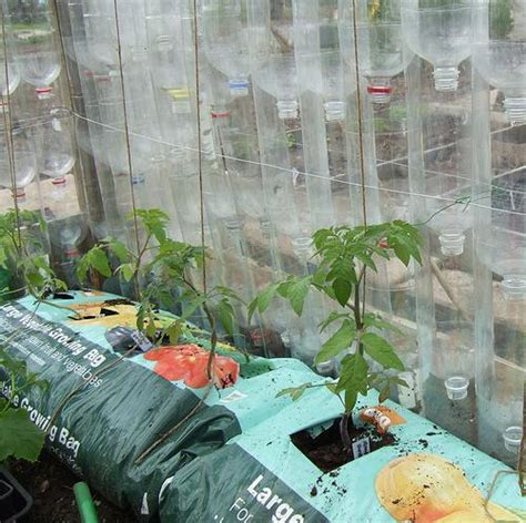 Cheapest House To Build Plans by How To Build A Greenhouse Using Old Plastic Bottles
