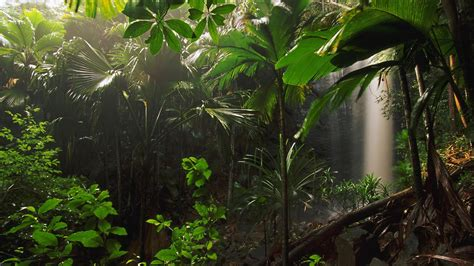 Cool Jungle Wallpaper | jungle wallpapers forest wallpapers high definition