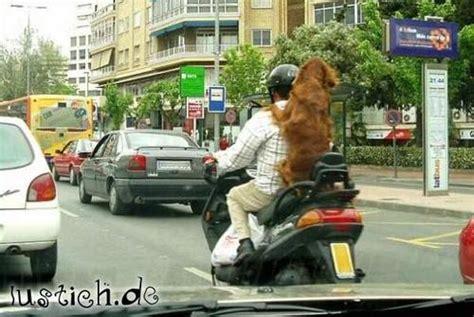 Motorrad Fahren Mit Hund by Beifahrer Hund Bild Lustich De