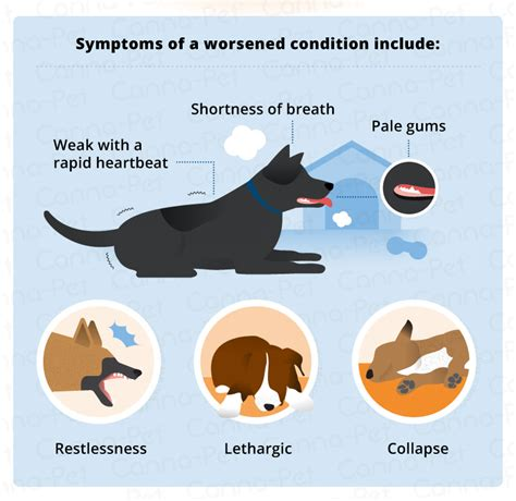 what causes bloat in dogs bloat in cats symptoms cats