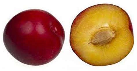 10 interesting plum facts my interesting facts