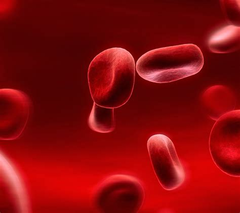 which blood component gives blood its color the composition of blood nathan g v thinglink