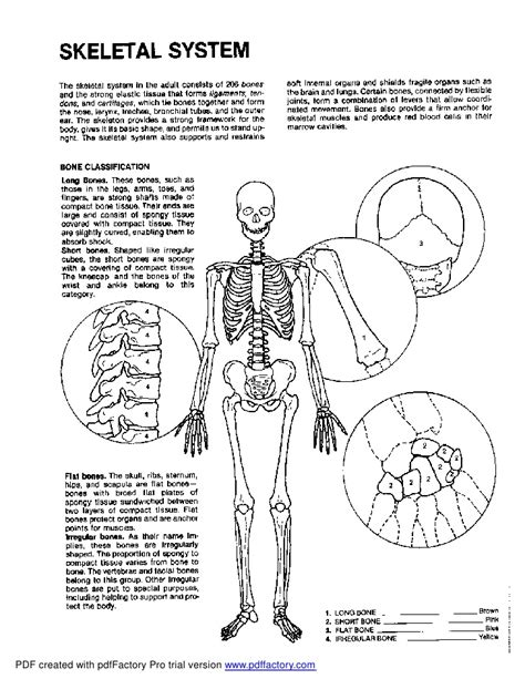 anatomy coloring book chapter 5 anatomy and physiology coloring pages anatomy coloring