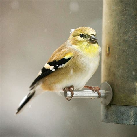most common backyard birds a cold winter day is perfect for curling up by your living