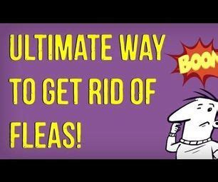 how to get rid of fleas on newborn puppies babies baby powder and dogs on