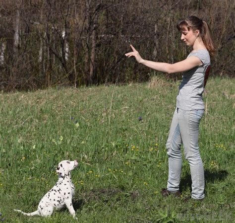 at what age should a puppy be potty trained what should i about puppy potty with pictures