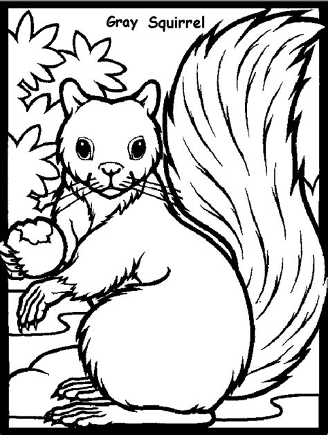 coloring page of a gray squirrel squirrel coloring pages gray squirrel coloring pages