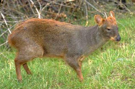 fotos animales zona sur de chile fauna zona sur y austral chile
