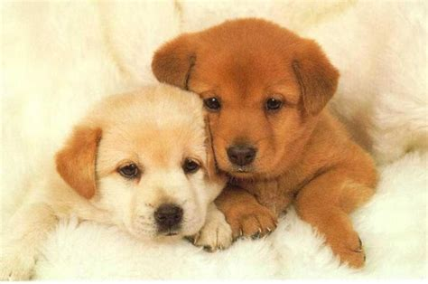 most adorable puppies 30 most cutest puppy pictures