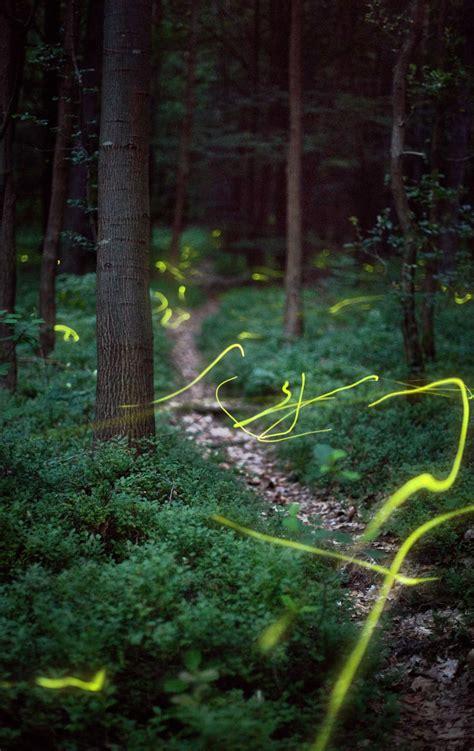 chaising fireflies chasing fireflies