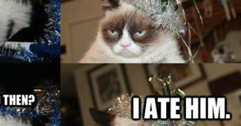 Grumpy Cat New Years Meme - new grumpy cat pictures on new years eve funny pic
