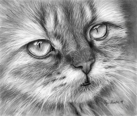 Decoupage Home Decor by Beautiful Cat Drawing By Olga Shvartsur