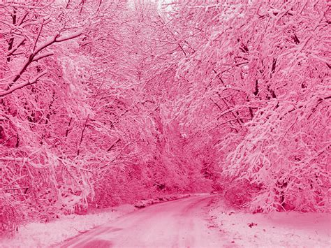 Is Pink by Pink Colors The Pink Edition