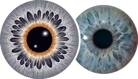 iris pattern types polyglandular infinite iris