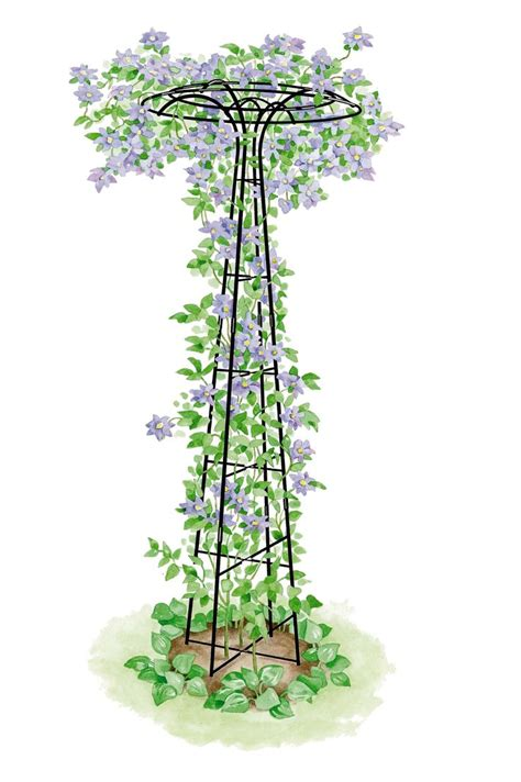 Shaped Garden Trellis 1000 Ideas About Trellis On Gardening