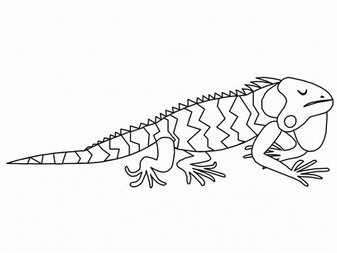 Printable Coloring Page free printable iguana coloring pages for
