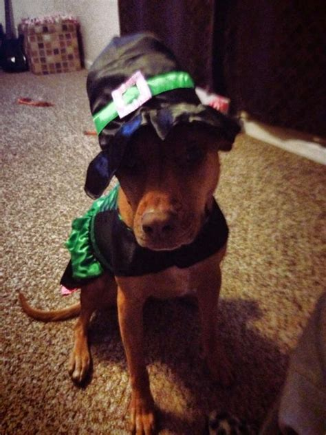 updated gallery reader submitted halloween photos local