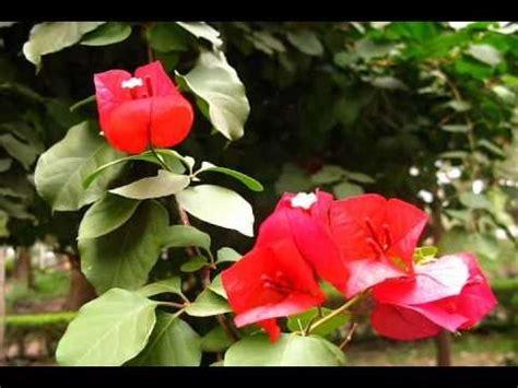 imagenes de flores que brillan verano flores mariposas cantos de aves vara flori