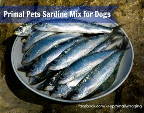 sardines for dogs primal sardine mix makes an easy feeding meal keep the wagging