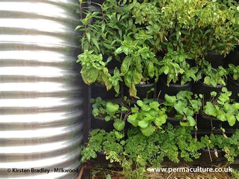 vertical gardening great  small spaces permaculture