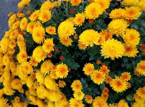 imagenes flores invierno cinco excepcionales flores de oto 241 o recomendadas