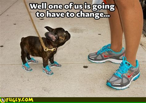 running shoes for dogs with matching running shoes fugly